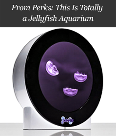 From Perks: This Is Totally a Jellyfish Aquarium