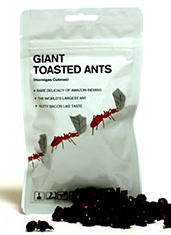 UD - Giant Toasted Ants