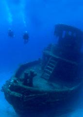 UD - Land Tortoise Diving