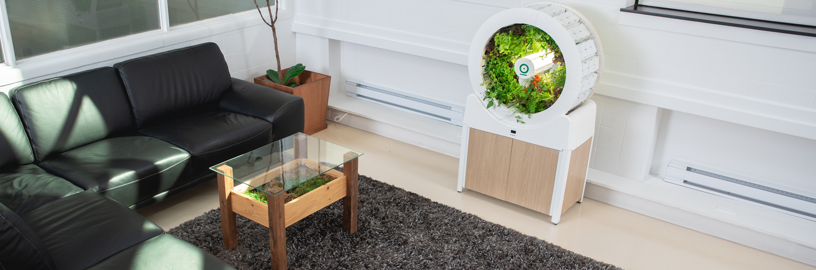 Holy Hell, There's a Garden in Your Living Room