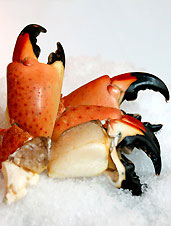 UD - George Stone Crab Home Delivery