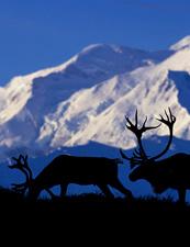 UD - Reindeer Sledding in Yakutsk