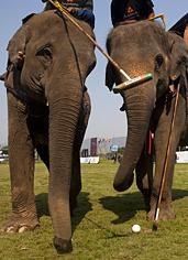 UD - Elephant Polo