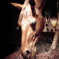 A Dead Horse Sells for 266K at Auction