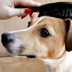 A Bit of Pampering for Your Pooch