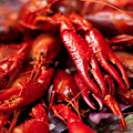 Crawfish Boiling with a Top Chef