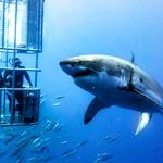 Cuddling in an Underwater Cage