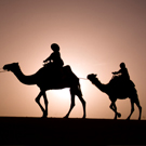 Tonight at Le Vú: Camel Rides