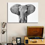 56% Off Gallery-Worthy Wildlife Photography