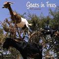 Goats in Trees Calendar