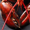 Lobster Five Ways