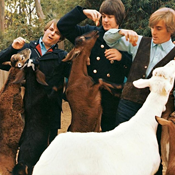 Brian Wilson Wants to Sing You Pet Sounds. All of It.