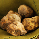 It's All White Truffles at Fiola