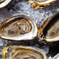 Like a Debutante Ball for Oysters
