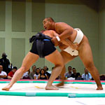 Meet Your New Sumo Coach