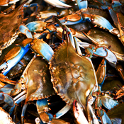 Everything's Coming Up Maryland Crabs