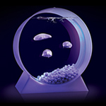 An Aquarium. Full of Jellyfish. Yep.