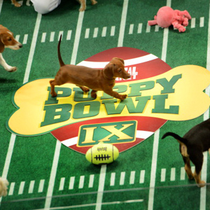 Puppy Bowl. Super Bowl. Both.
