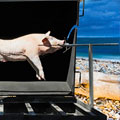 A Pig Roast at Oak Street Beach