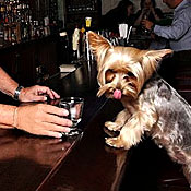 There Will Be Dogs at This Happy Hour