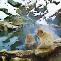 Hot-Springing with Monkeys. Seriously.