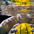 Wet. Wild. Water Polo...