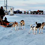 The World's First Dogsled Taxi