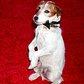 Uggie the Dog Gets a Book Deal