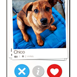 It's Tinder for... Adopting Puppies