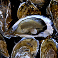 All the Oysters You Can Eat