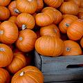 Oktoberfest & Pumpkin Beer Festival