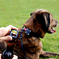 The Dog Collar Bottle Opener