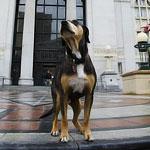 A Dog Runs for Mayor in Oakland