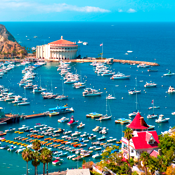 You Don't Need a Reason to Visit Catalina. Still...