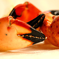 Endless Stone Crabs