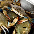 Blue Crabs, Done Red-State-Style