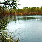 Micah Pond