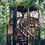 Eating Breakfast in a Treehouse