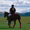 Polo in Wine Country