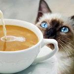 Grab an Espresso and Maybe a Kitten