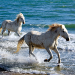 Running with Horses in Assateague