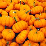 Pumpkin Hand Massages. It's a Thing.