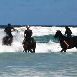 Horse Surfing. (Yep, Horse Surfing.)