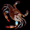 Memorial Day Crab Boil at Sou'Wester