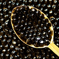 Caviar, Champagne and New Year's