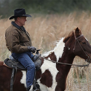 The Internet Is in a Tizzy Over Roy Moore's Horse