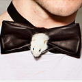 The Rat Bowtie