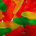 Fish Candies From Indy's Best-Loved Candy Shop