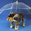 The Dog-Brella